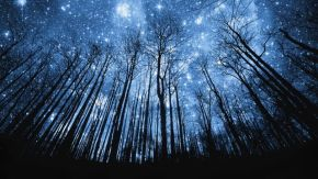 forest-night-looking-for-more-night-sky-wallpapers-new-hd-wallpaper