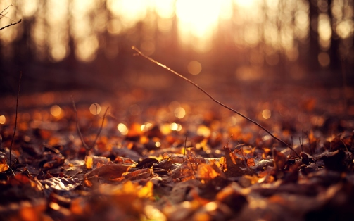 autumn_leaves_background