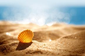 image-shell-on-beach-wallpaper